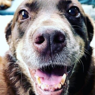 Brown dog with smile