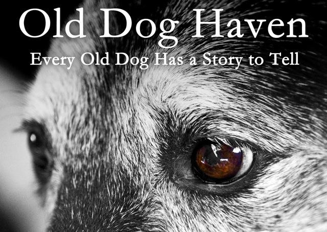 old dog haven