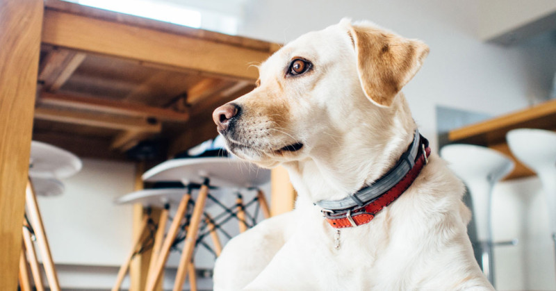 Best Senior Dog Food Key Ingredients To Look For The Grey Muzzle