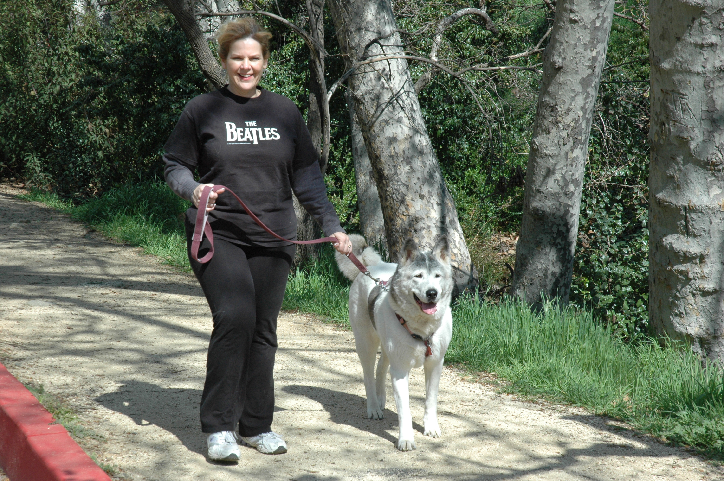 Protecting Your Dog What To Do Should The Worst Happen By Denise