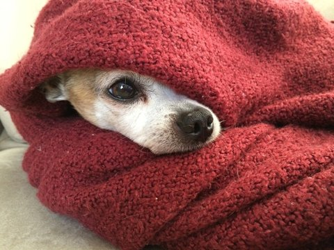Small dog in blanket