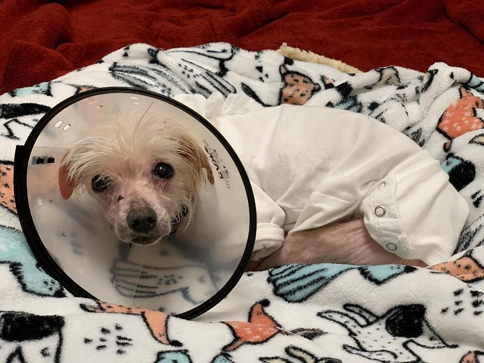 Dolly with cone