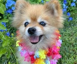 Small dog with flowers