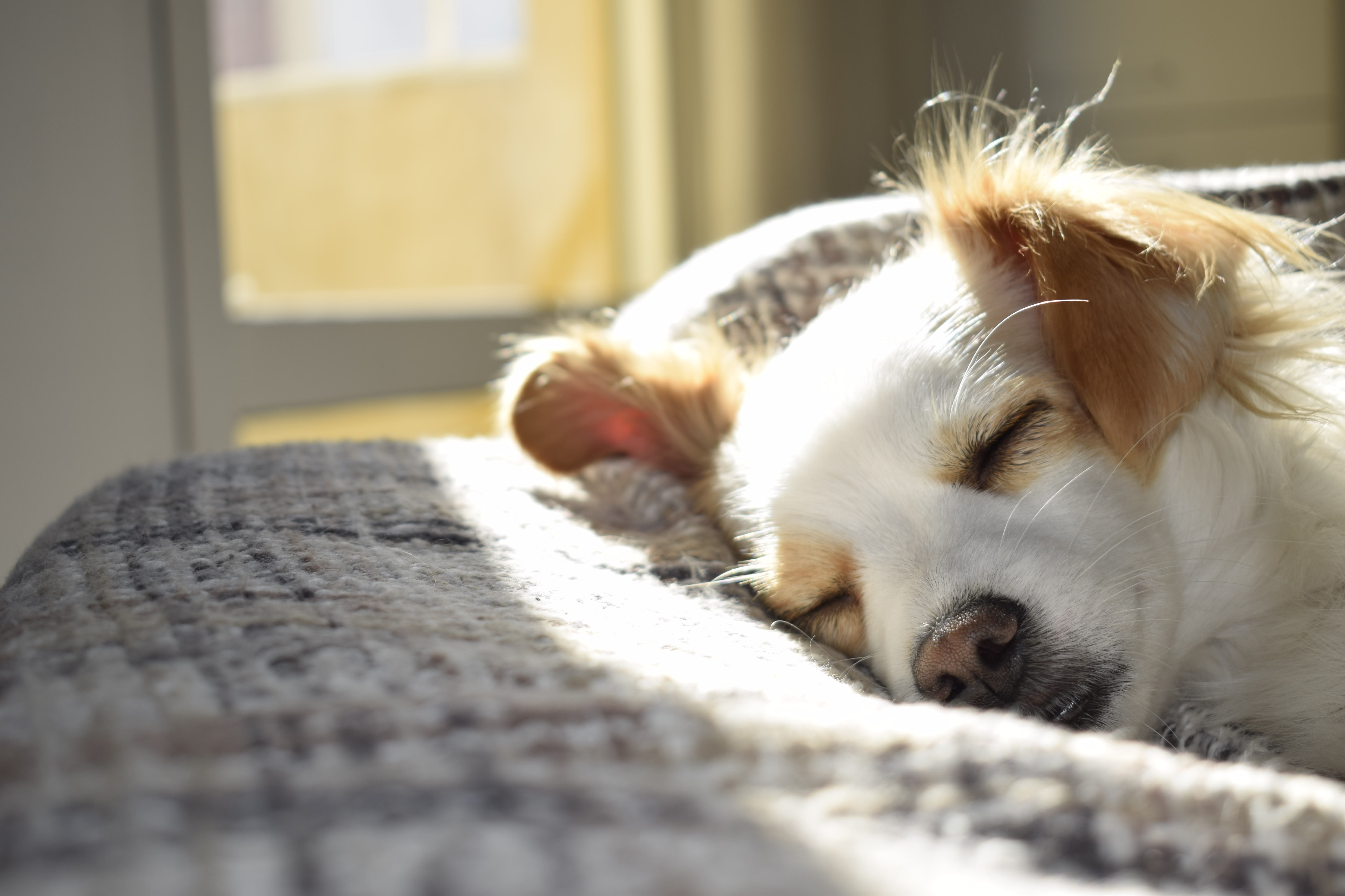 Little dog sleeping in bed