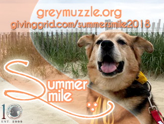 "Brown and tan dog with mouth open. Top of photo says ""greymuzzle.org givinggrid.com/sumersmile2018"". Bottom left says summer smile with grey muzzle 10 year logo."