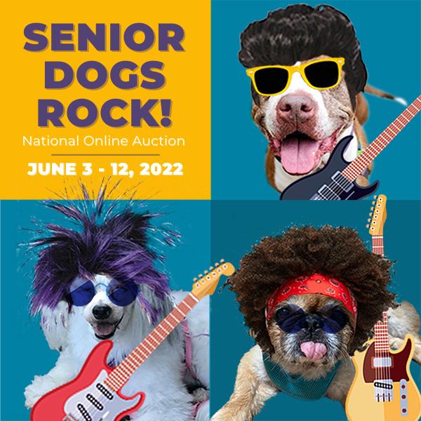 Senior Dogs Rock Auction