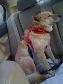 Zoe buckled up