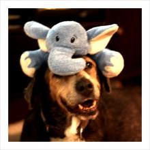 Abby and her wooby, a stuffed elephant, on her head