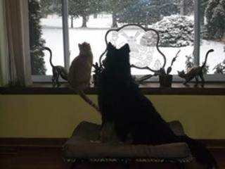 Bandit snow-gazing with his kitty pal