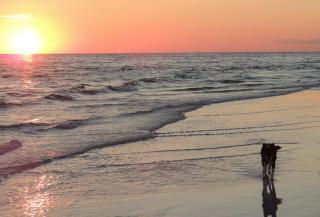 Hops walking at the water's edge at sunset
