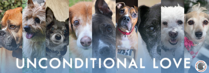 Close up of multiple senior dogs with saying: unconditional love