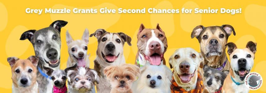 Grey Muzzle Grants Give Second Chances to Senior Dogs