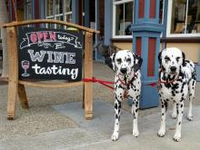 Dalmations at Mutt Lynch tasting room